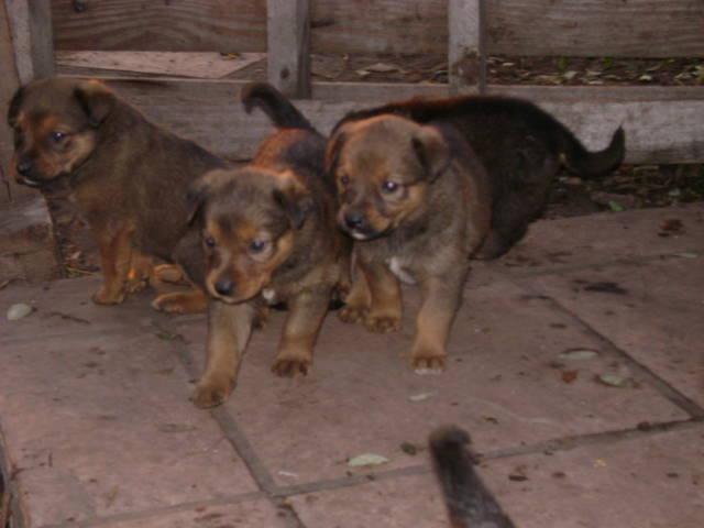 130615 Cachorritos